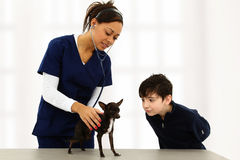 Veterinário e criança com chihuahua fotos de stock