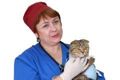 Veterinário e gato isolados no fundo branco. Imagem de Stock Royalty Free