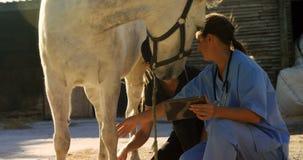 Veterinário e mulher que interagem ao examinar o cavalo 4k video estoque