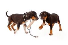 Veterinário e paciente do cachorrinho Foto de Stock Royalty Free
