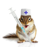 Veterinário engraçado do esquilo com seringas Fotos de Stock Royalty Free