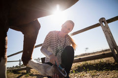 Veterinário fêmea de sorriso que une a sapata no pé do cavalo fotos de stock royalty free