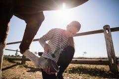 Veterinário fêmea novo que une a sapata no pé do cavalo imagem de stock royalty free