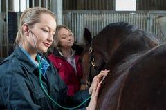 Veterinário fêmea que dá o exame médico ao cavalo no estábulo foto de stock