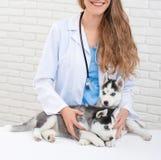 Veterinário na clínica moderna que importa-se com cães roncos pequenos Imagens de Stock