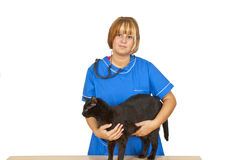 veterinär- Arkivbild