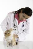Veterinär Arkivfoto