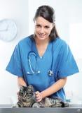 Veterinär- att bry sig av en gullig katt royaltyfria foton