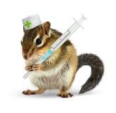 Veterinär- begrepp, rolig jordekorre med injektionssprutan och doktorsunifo Royaltyfria Foton