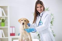 Veterinär- dam undersöka hunden Arkivfoton