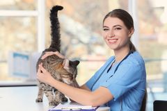 Veterinär doc med katten royaltyfri fotografi