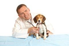 veterinär för beagledoktorsvalp royaltyfri foto
