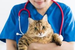 Veterinär- hållande gullig katt på händer arkivfoto