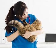 Veterinär- hållande gullig katt på händer royaltyfria bilder