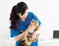 Veterinär- hållande gullig katt på händer arkivbilder