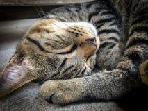 Veterinär- kirurg som steriliserar en tillfällig katt Arkivfoto