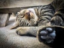 Veterinär- kirurg som steriliserar en tillfällig katt Fotografering för Bildbyråer