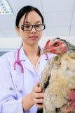 Veterinär- kontrollera för doktor Arkivfoto