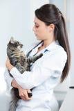 Veterinär med en katt Arkivfoton