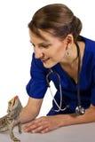 Veterinär med en reptil arkivfoto