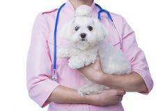 Veterinär med hunden royaltyfria foton