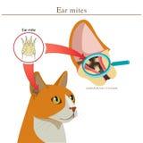 Veterinär- medicin Cat Ear Mites Vector Illustration Örakvalsterar i djur Spridning av infektion vektor illustrationer