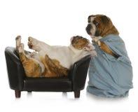 veterinär- omsorg Arkivbilder