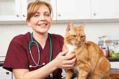 Veterinär- sjuksköterska With Cat In Surgery royaltyfri bild
