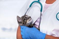 Veterinär- sjukvårdprofessionell som rymmer den unga kattungen arkivbilder