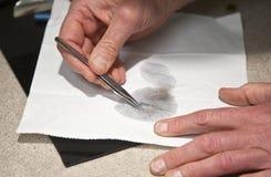 Veterinär som kontrollerar för loppor royaltyfri fotografi
