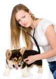 Veterinär som kontrollerar hjärtahastigheten av en vuxen hund. Royaltyfri Fotografi