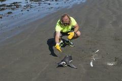 Veterinär som kontrollerar pingvinet på stranden Royaltyfri Bild