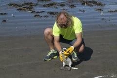 Veterinär som kontrollerar pingvinet på stranden Arkivfoton