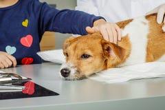 Veterinär som kontrollerar upp sjuk hund med stetoskopet Royaltyfri Foto