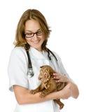 Veterinär som lite rymmer valpsharpeihunden Arkivfoton
