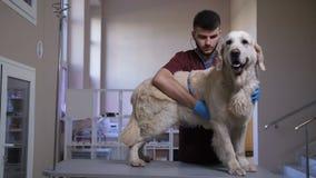 Veterinär som lyssnar till hearbeat för hund` s med stetoskopet stock video