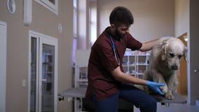 Veterinär som slår och talar till den tålmodiga hunden på kliniken stock video