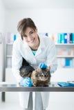 Veterinär som undersöker en katt på den kirurgiska tabellen Arkivbild