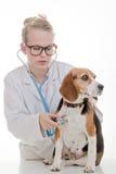 Veterinär- undersökande hund Fotografering för Bildbyråer
