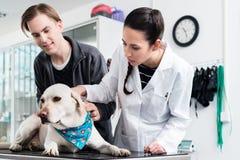 Veterinär- undersökande hund arkivfoton