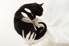 Veterinär- utförande auskultation en sjuk svart kattunge i clen Fotografering för Bildbyråer
