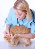 veterinär- white Royaltyfria Foton