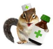 Veterinärbegrepp, roliga läkarbehandlingar för flaska för ekorredoc-håll, på whit Royaltyfri Foto