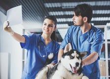 Veterinärdoktorer med hunden undersöker mycket noggrant röntgenstrålen för hund` s i veterinär- klinik royaltyfri foto