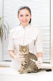 Veterinären mäter temperaturen av en kattunge Royaltyfri Fotografi