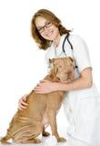 Veterinären omfamnar den vuxna sharpeihunden. Arkivfoto
