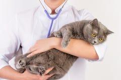 Veterinären rymmer en katt i henne armar royaltyfri foto