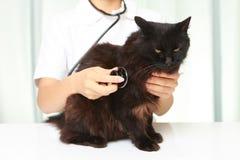 Veterinären undersöker en katt Royaltyfri Fotografi