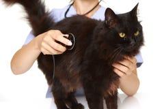 Veterinären undersöker en katt Fotografering för Bildbyråer