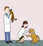 veterinärer Fotografering för Bildbyråer